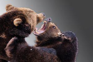 bears-difficult-conversations